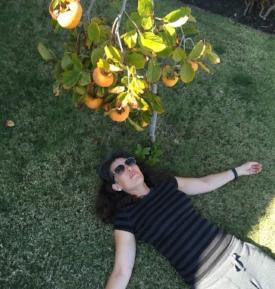 私の柿木。 おいしい。