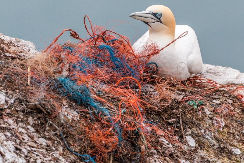 Scientists estimate that 8 million metric tons of plastic pollution makes its way into the ocean each year. This includes single-use plastics, ghost fishing gear, and more.