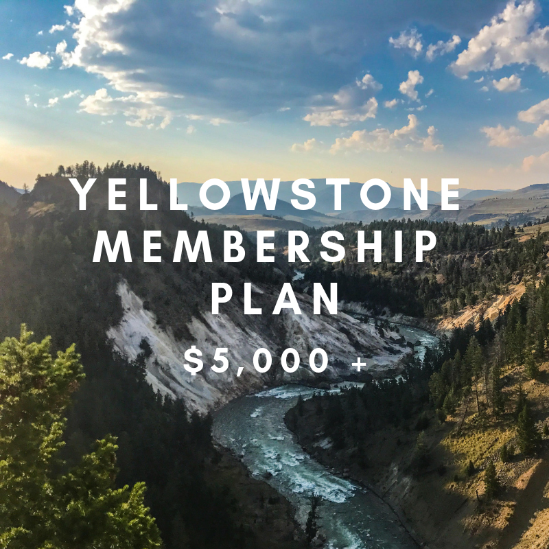 YELLOWSTONE MEMBERSHIP- $5,000 +     ACC Distinguished Membership    Your contribution allows us to take ACC to the next level by helping fund our expansion. Through this level of membership, we are able to continue growing our team, reach millions on social media, launch impactful campaigns, plan national activism-based events, and make an impact on Capitol Hill.