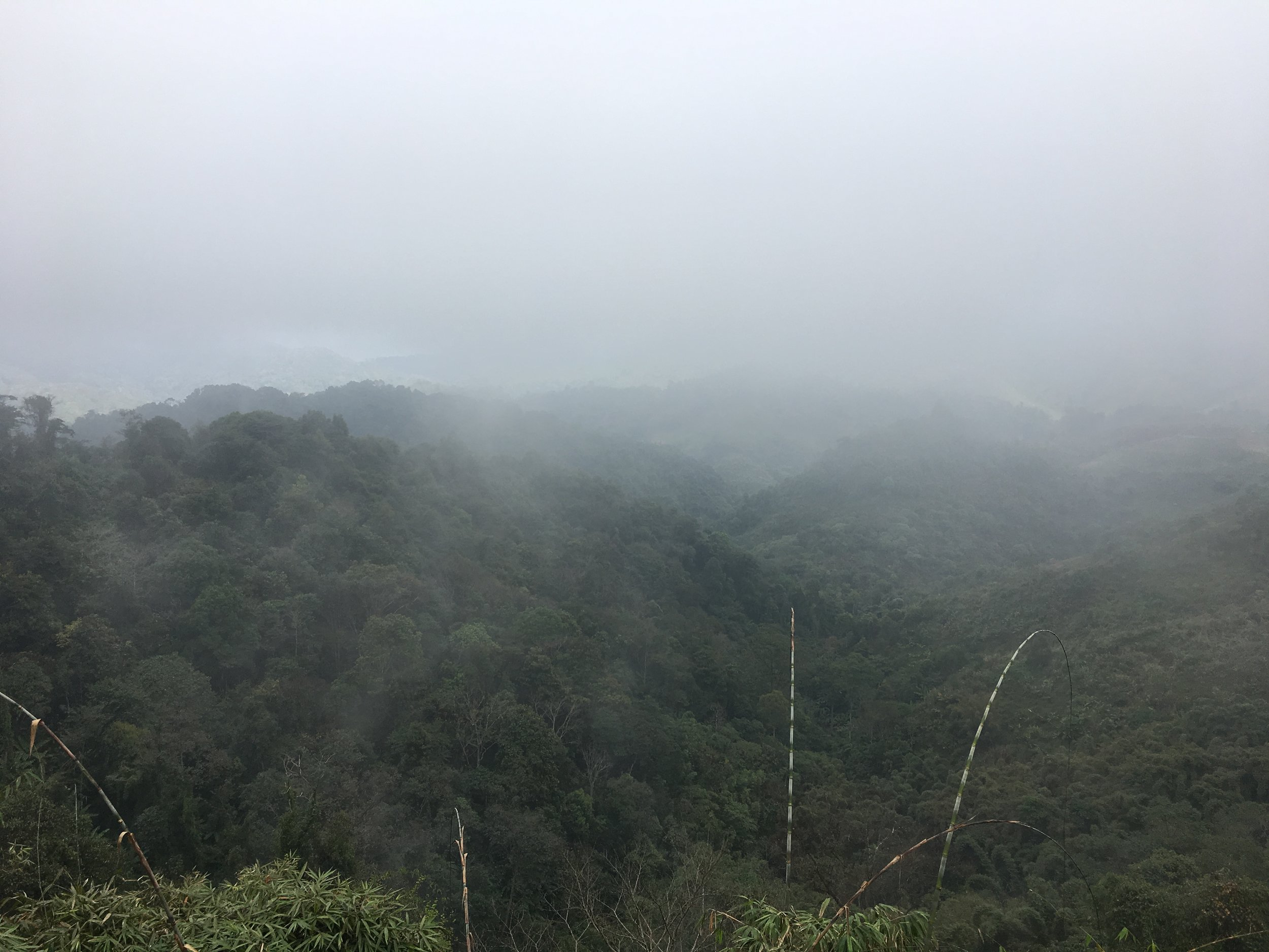 'Welcome to the jungle, we've got fog and rain'