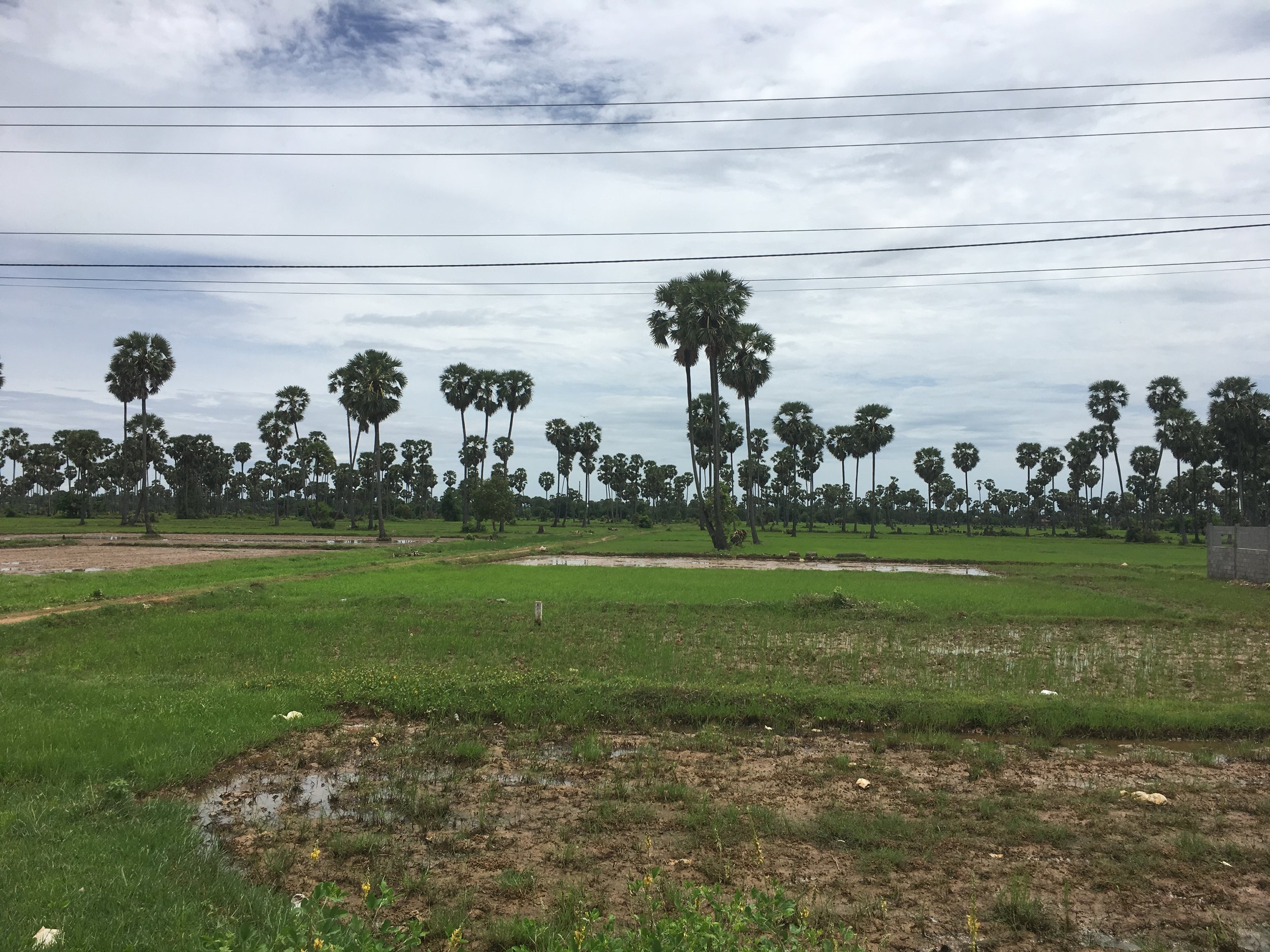 Cambodia really does feel like a Kingdom, with it's flat plains dotted with palm tress.