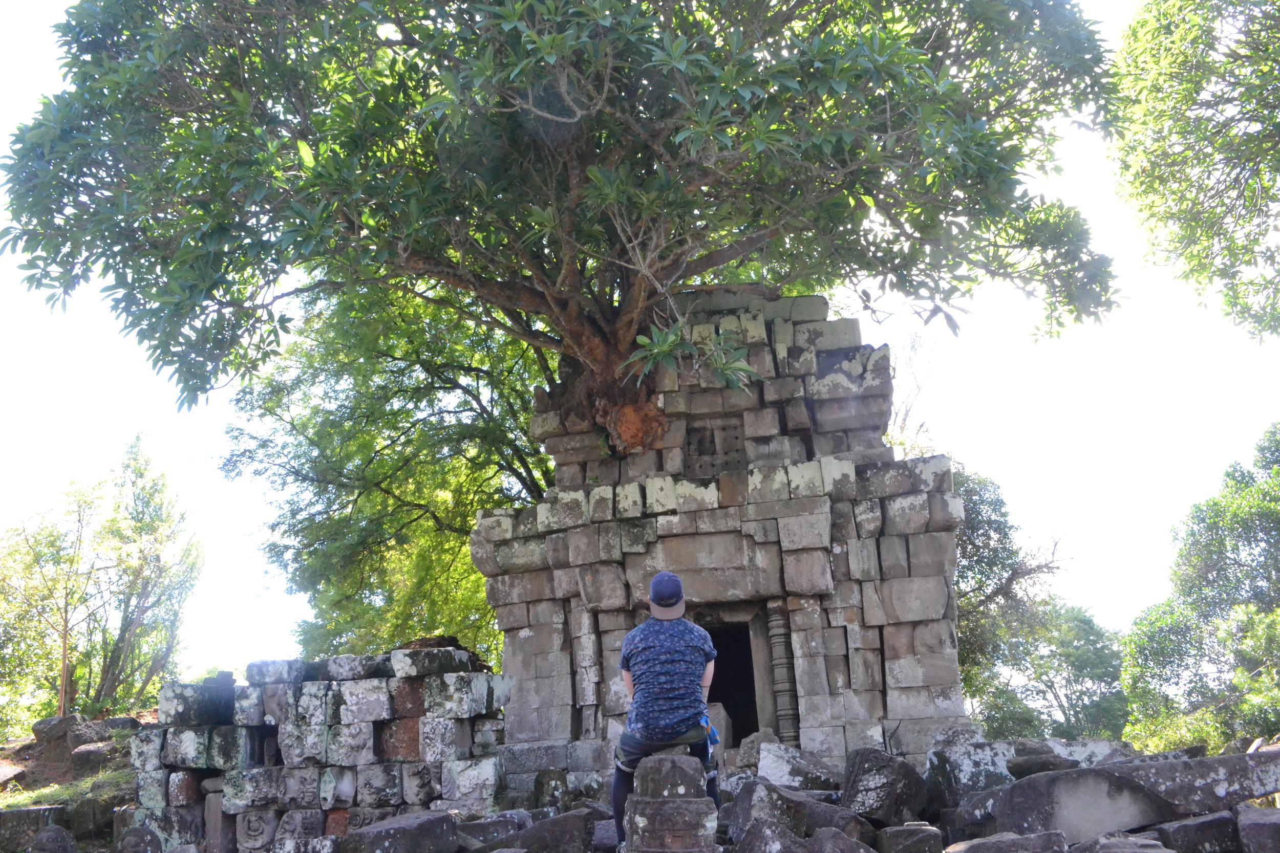 Admiring natures course at Phnom Bok, Angkor.
