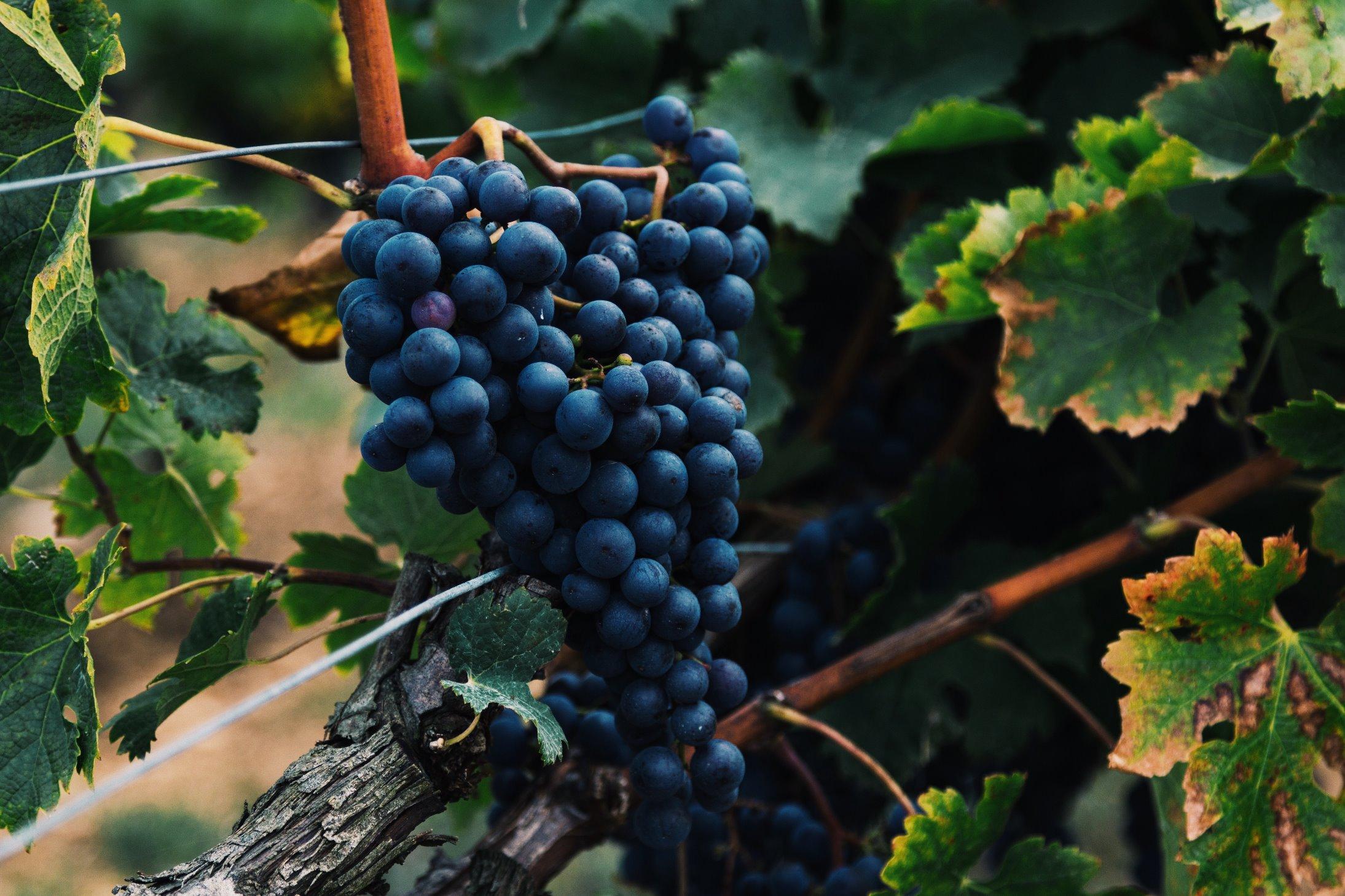 Mendoza Wine Travel.jpg