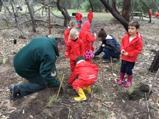 bush tree planting 1.jpeg
