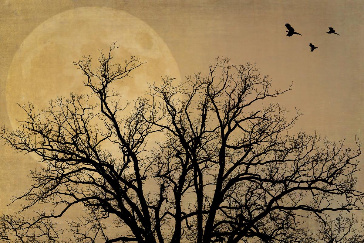 Karla Bernstein_One Night I Dreamed...Silhouettes4.jpg