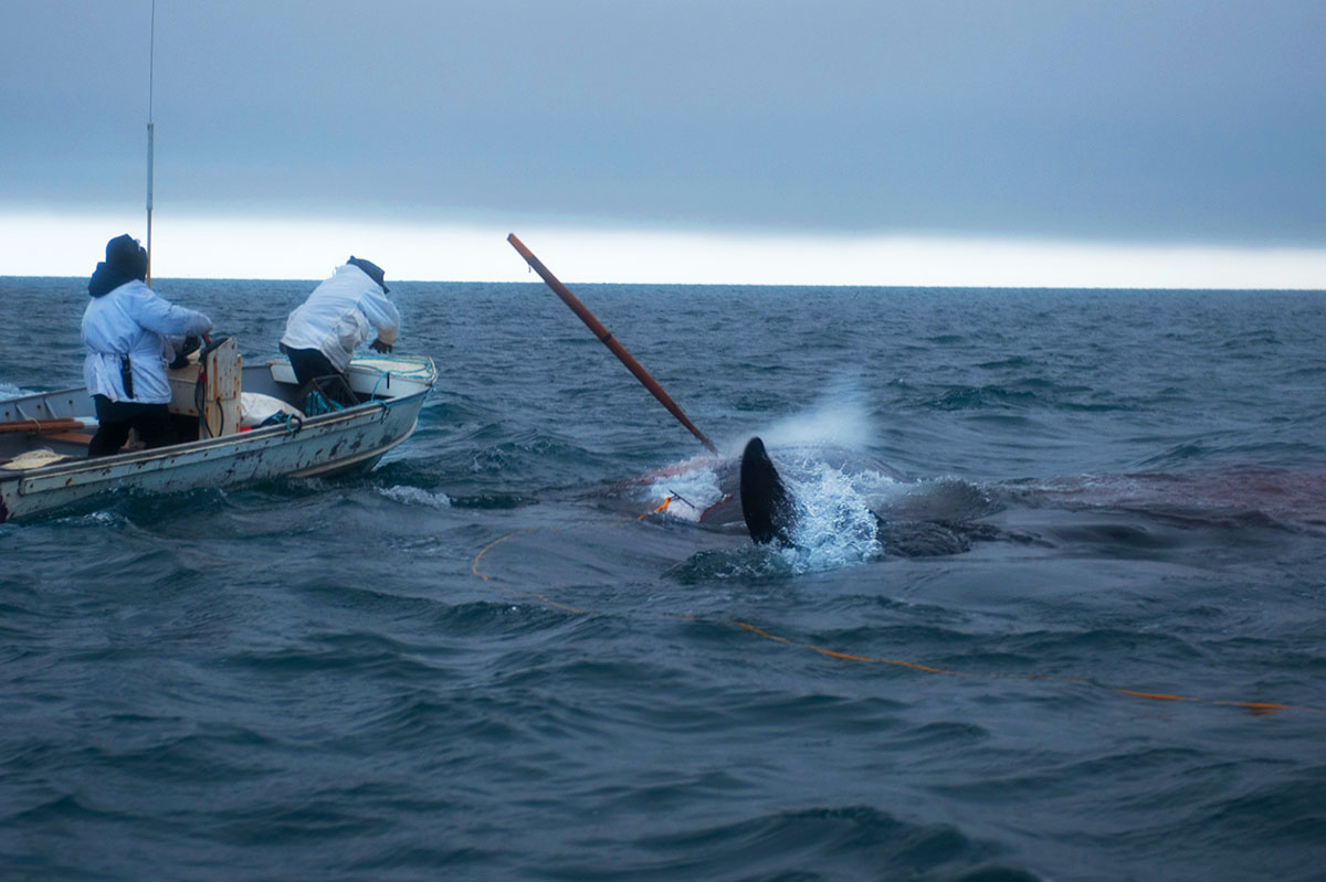 Luciana Whitaker _ People of the Ice _ Inupiaq Whalers Harpooning a Whale.jpg