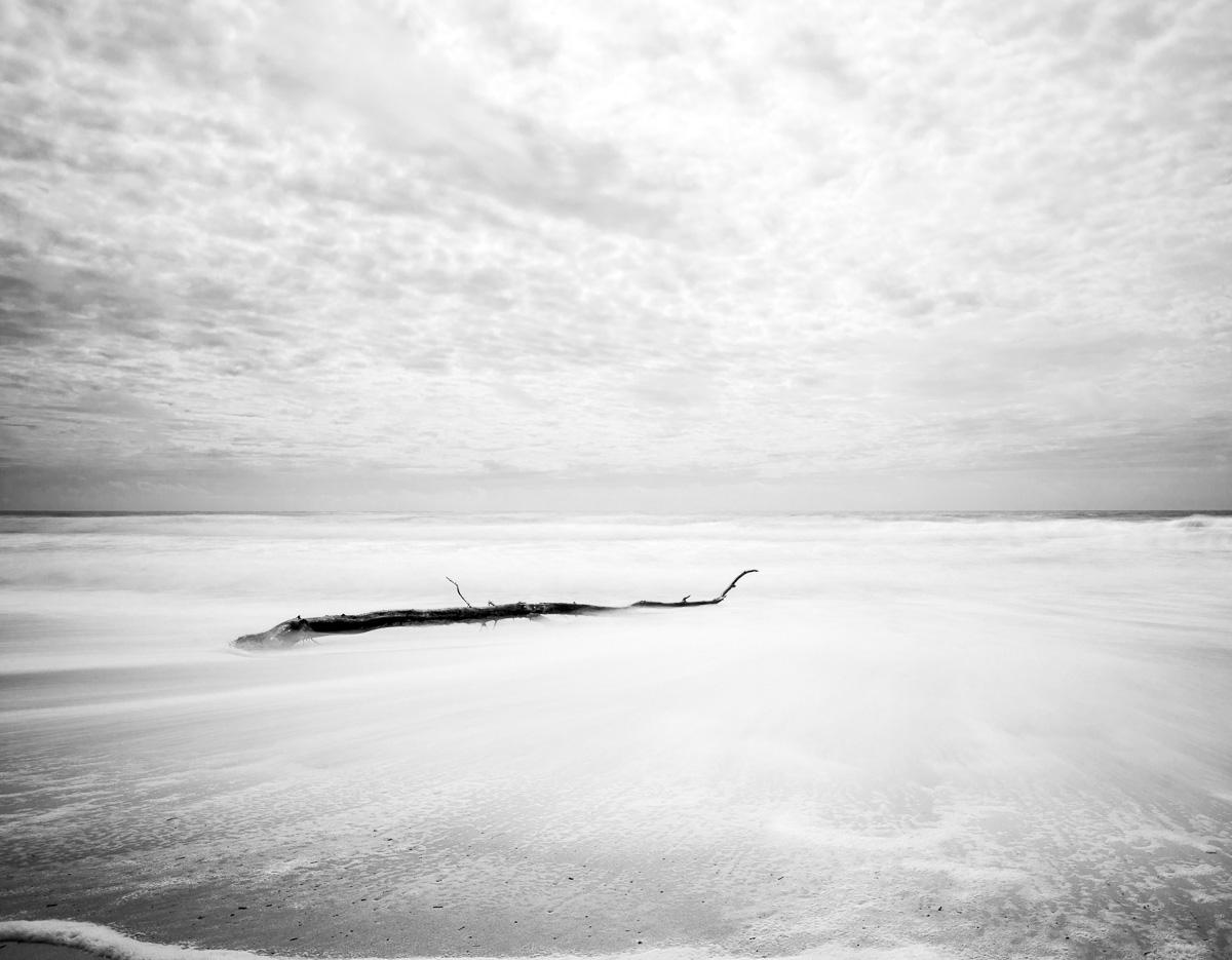 Archana Vikram _ The Hush _ Tree Trunk at Sea.jpg