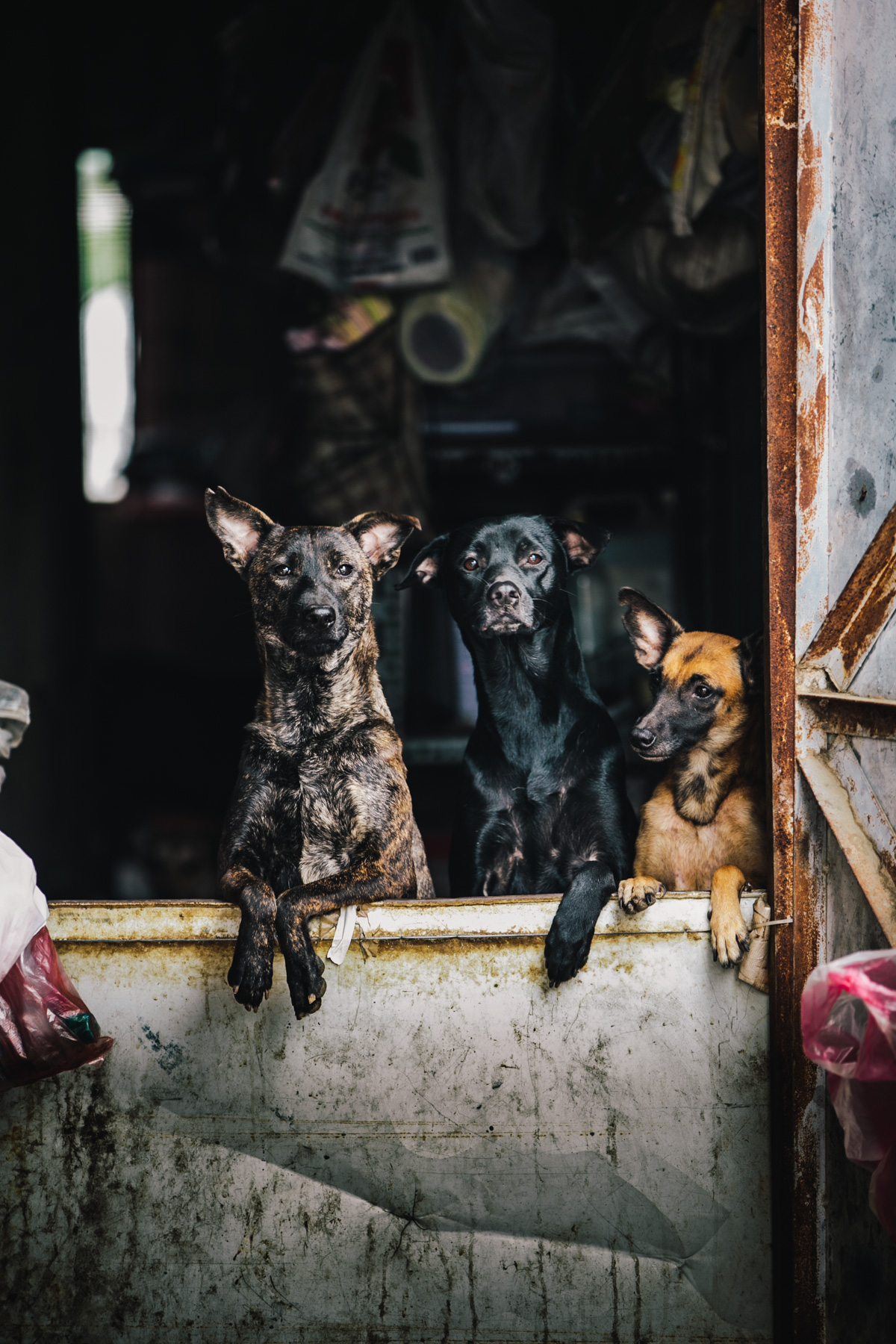 Kalen Sheng Fu_A Sheltered Life_Untitled 02.jpg