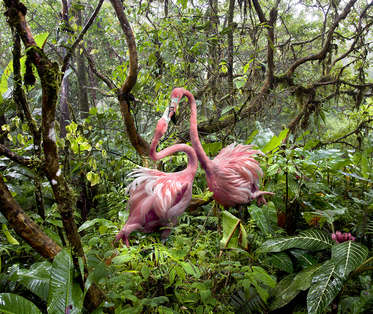 Two Lost Flamingos Find Love in the Jungle