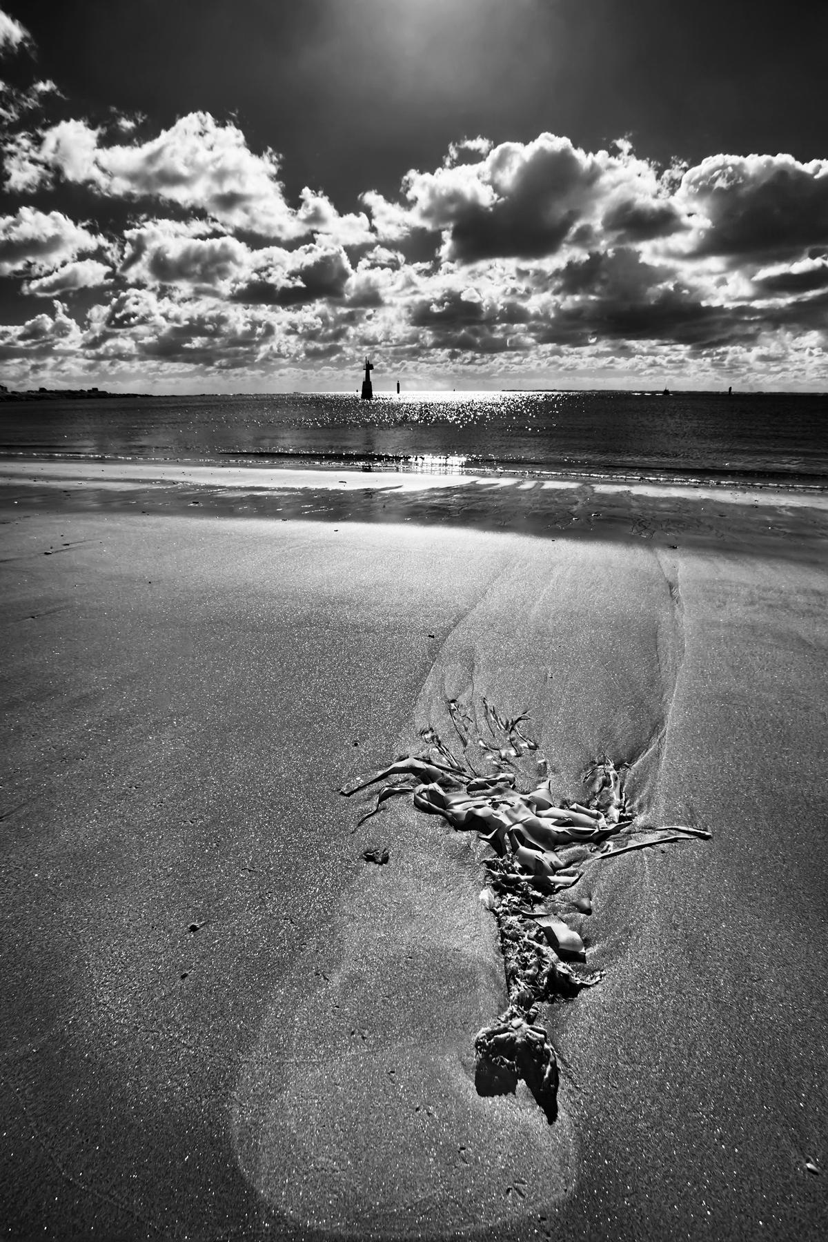 Quiberon Kelp