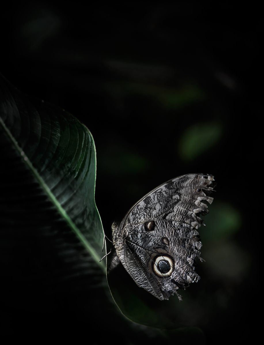 samuel Feron_Series Butterflies_Butterfly1.jpg