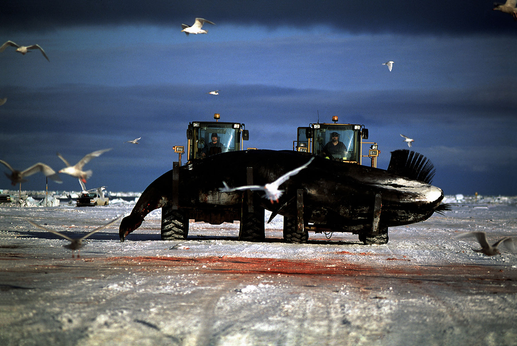 Loaders and Bowhead