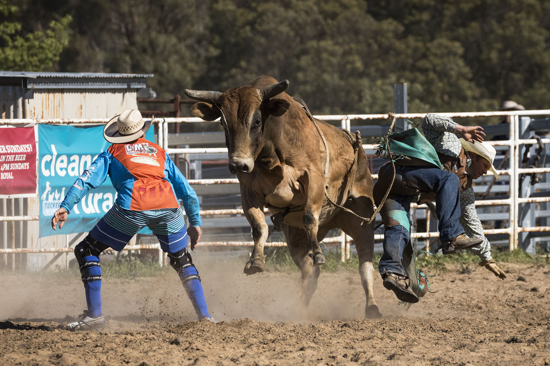 BrianJones_Rodeo Bull Riding_Bull Riding 4.jpg