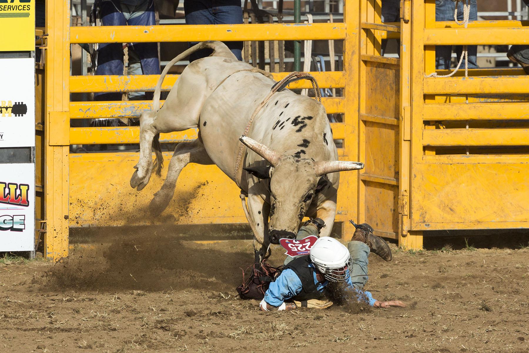 BrianJones_Rodeo Bull Riding_Bull Riding 5.jpg