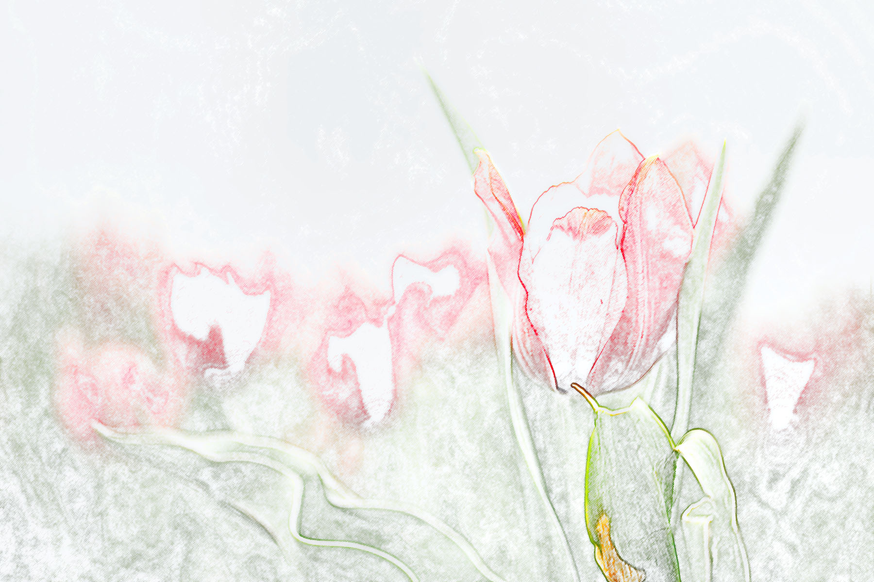 Buket Ozatay_Series Mysthesis of Tulips_Tulip 2.jpg