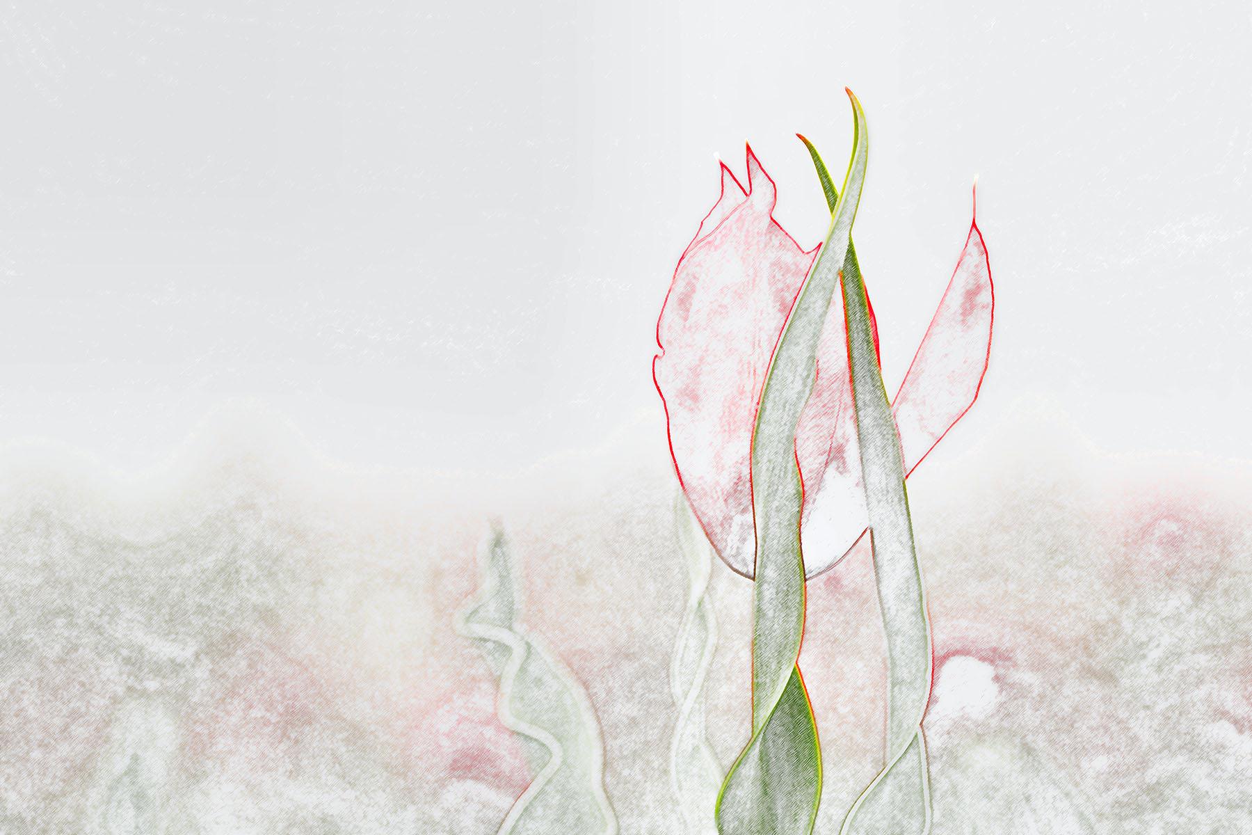 Buket Ozatay_Series Mysthesis of Tulips_Tulip 4.jpg