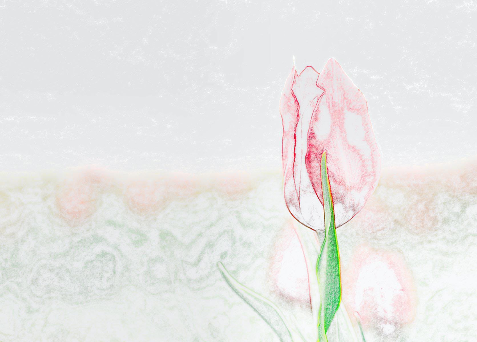 Buket Ozatay_Series Mysthesis of Tulips_Tulip 5.jpg