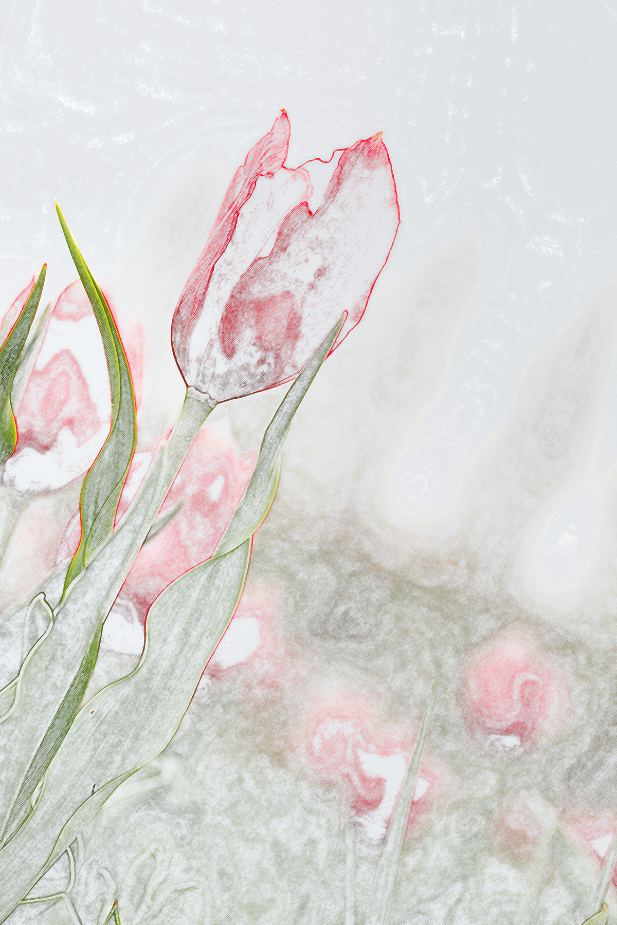 Buket Ozatay_Series Mysthesis of Tulips_Tulip 3.jpg