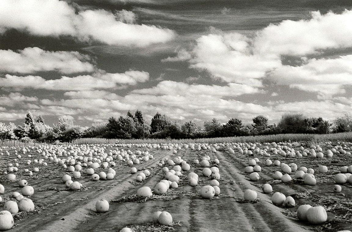 © Mia Wisnoski, 'Pumpkin Harvest'