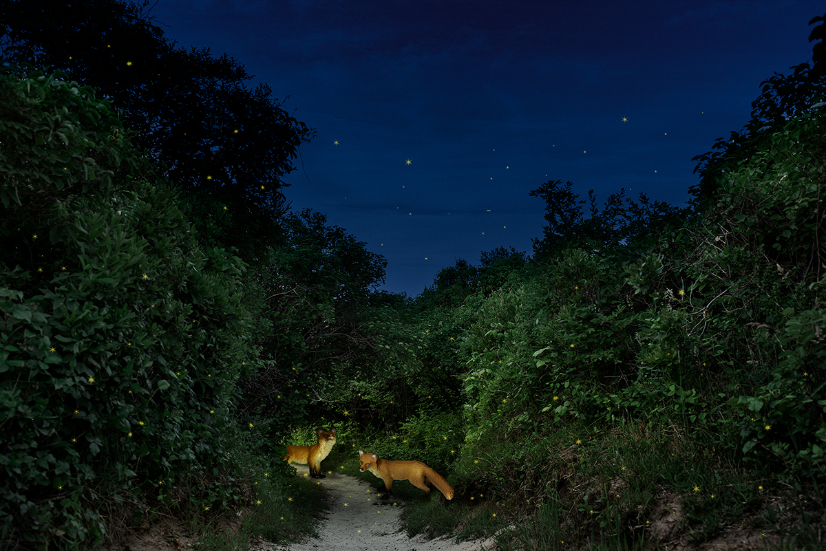DeAnnDesilet_Wildsongs_Fireflies.jpg