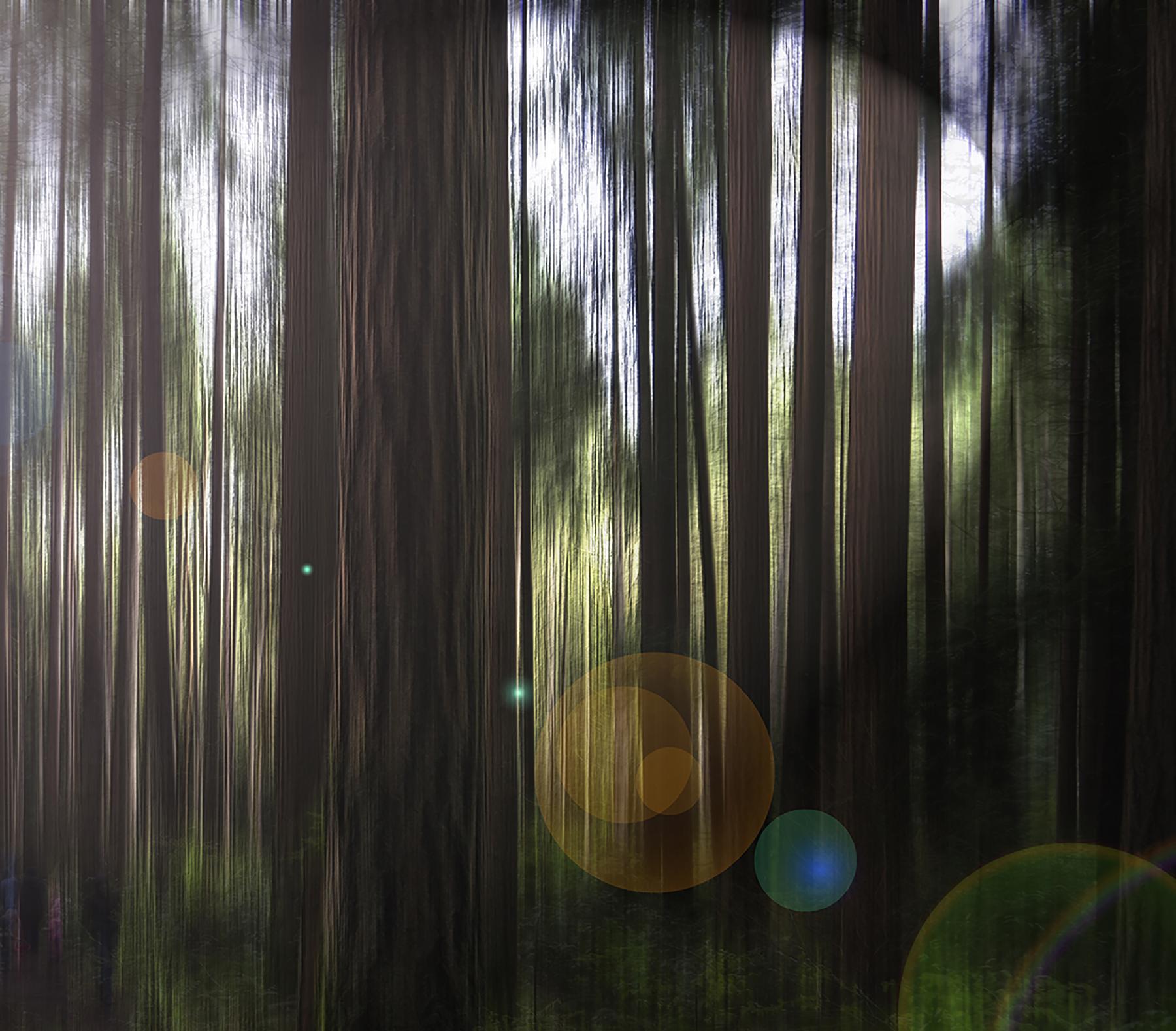 Hedva Boger_A magical forest.jpg