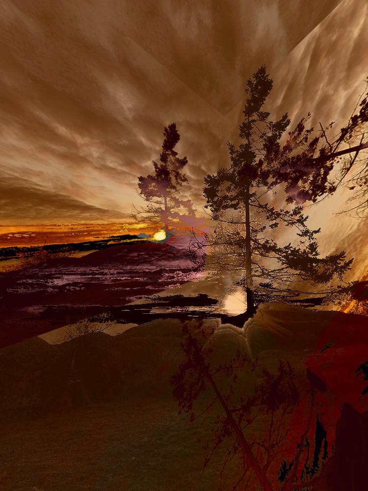 Elaine_Hunter_Sechelt Tree_sechelt tree 5.jpg