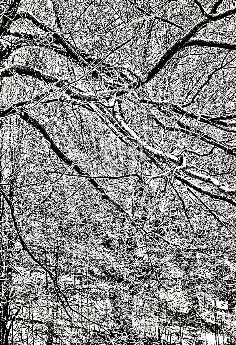 Angela P Schapiro_Winter Garden_A Day of Ice and Snow.jpg
