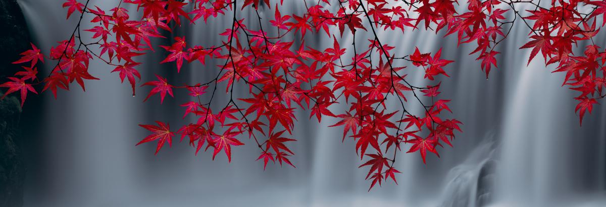 Peter Lik_Scarlet Falls.jpg