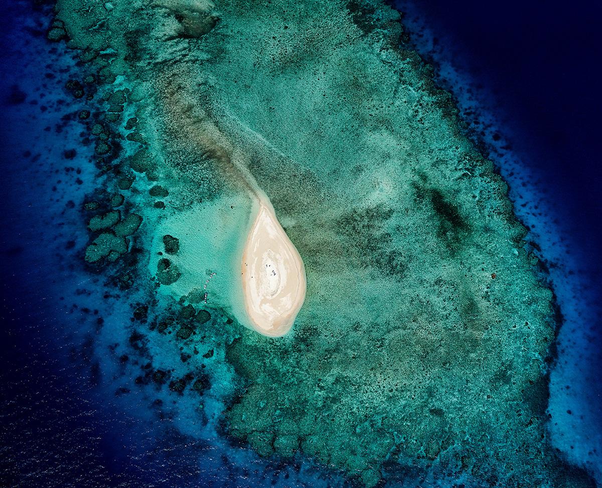Stuart Chape_Coral reef series 3_ Indigo.jpg
