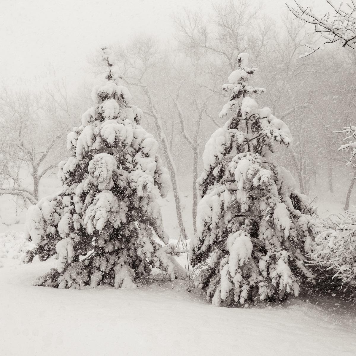 MichaelKnapstein_Winter_Snowfall.jpg