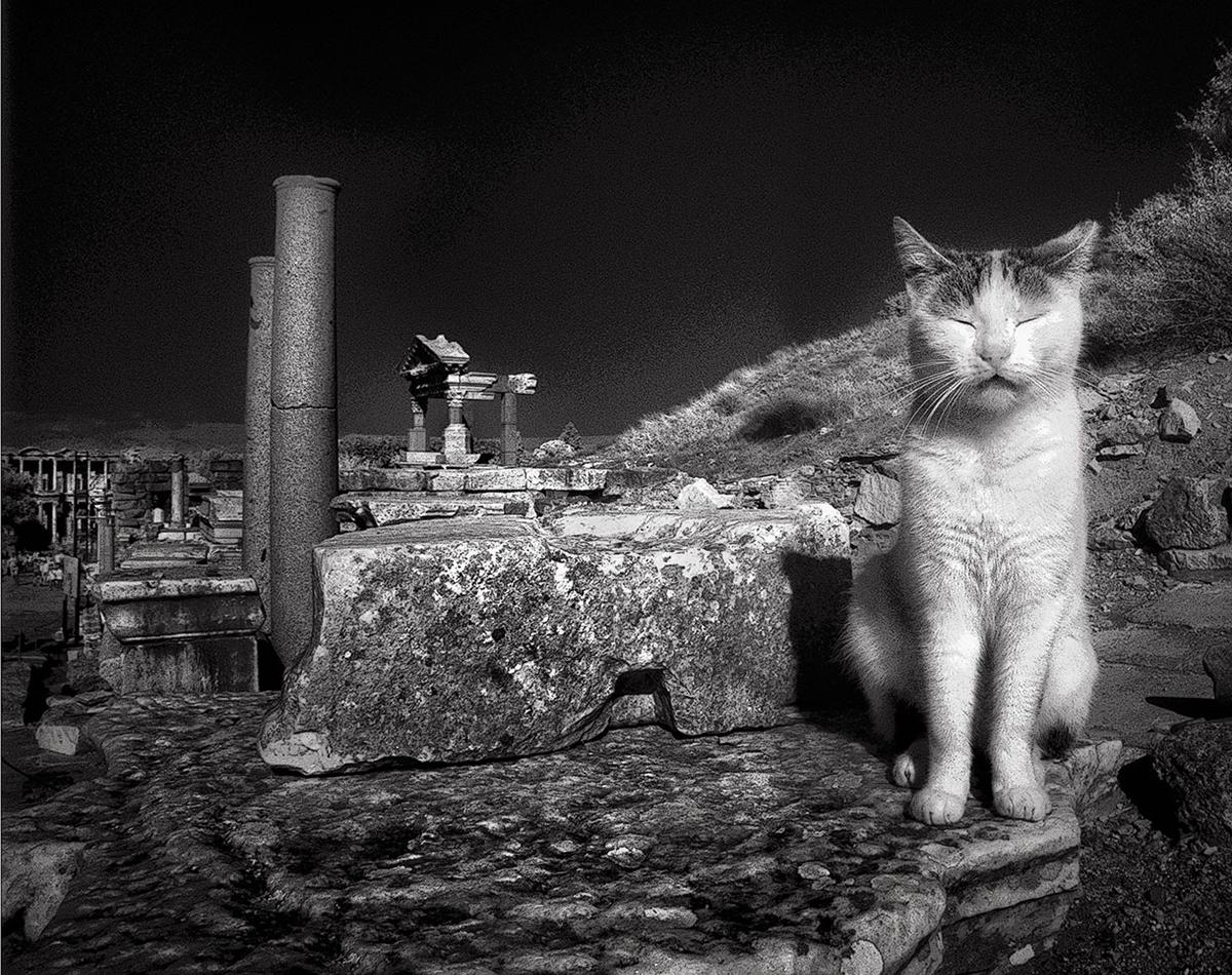 Dolores Smart_Cats at Ephesus Turkey_CatNap.jpg