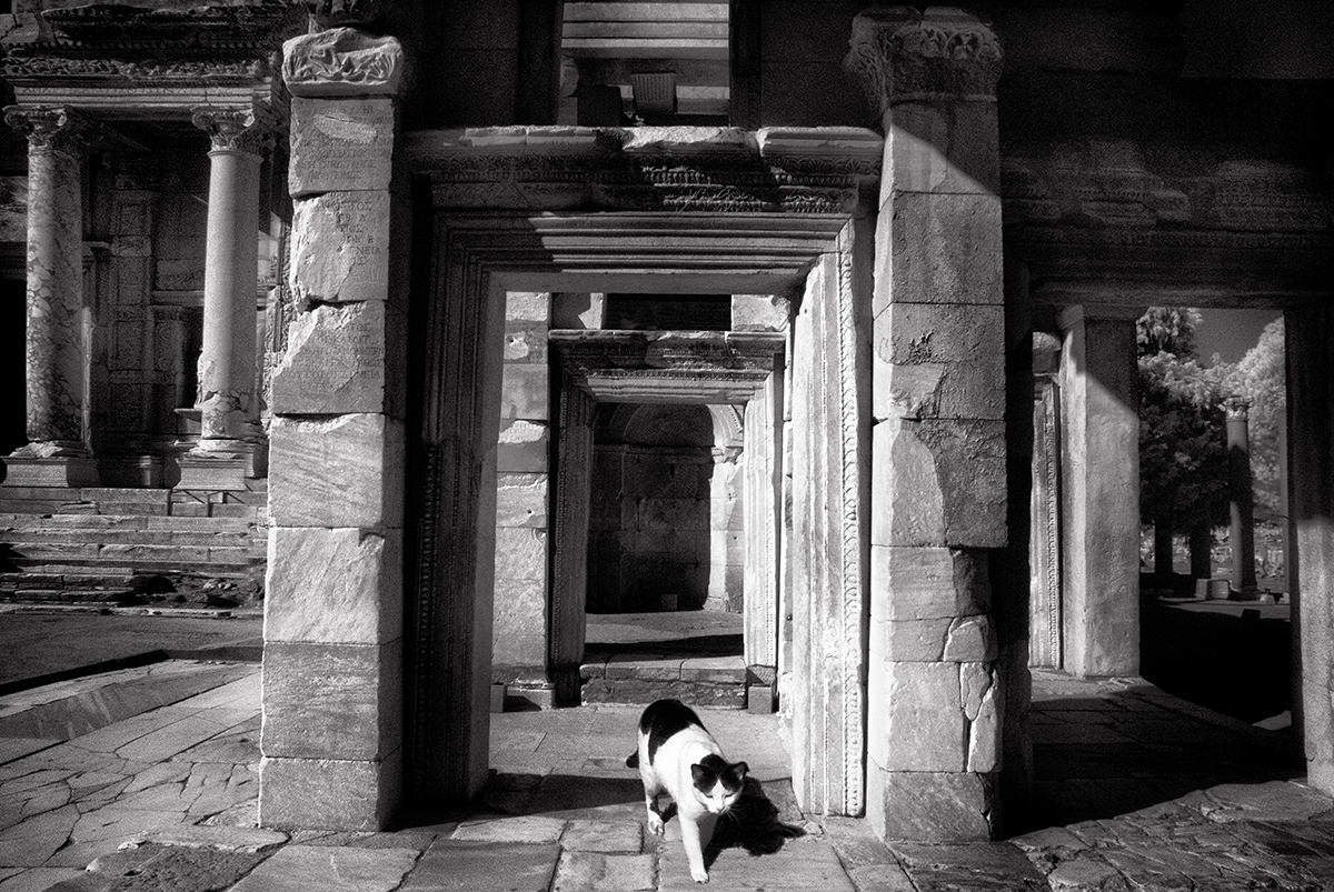 Dolores Smart_Cats at Ephesus_A Grand Entrance.jpg