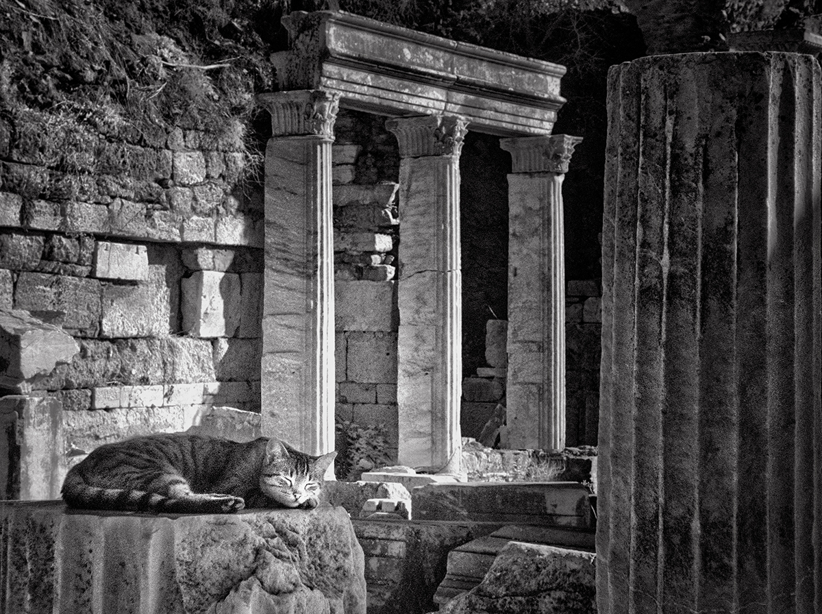 Dolores Smart_Cats at Ephesus_Just Fed.jpg