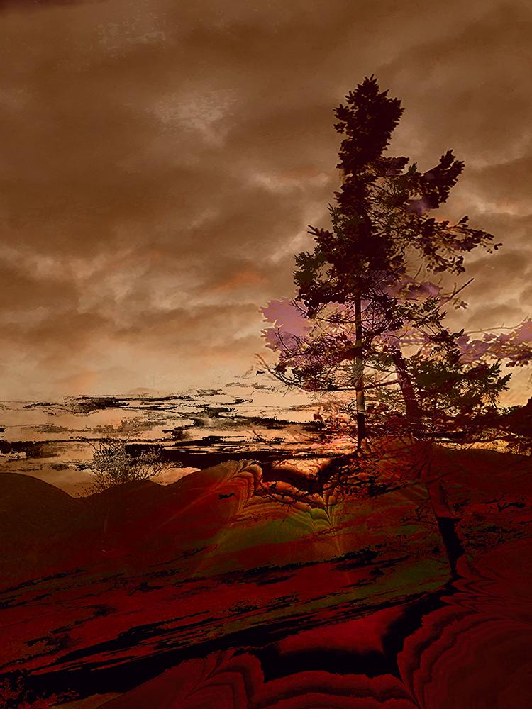 Elaine_Hunter_Sechelt Tree_ sechelt tree 2.jpg