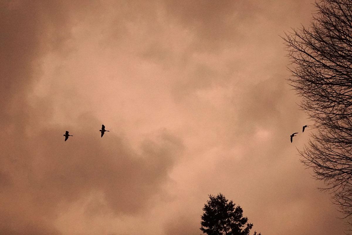 KayErickson_Birds_Split.jpg