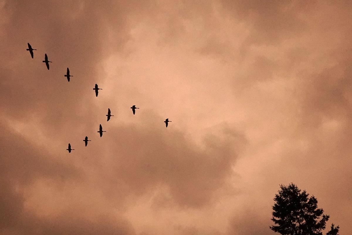 KayErickson_Birds_VFormation.jpg