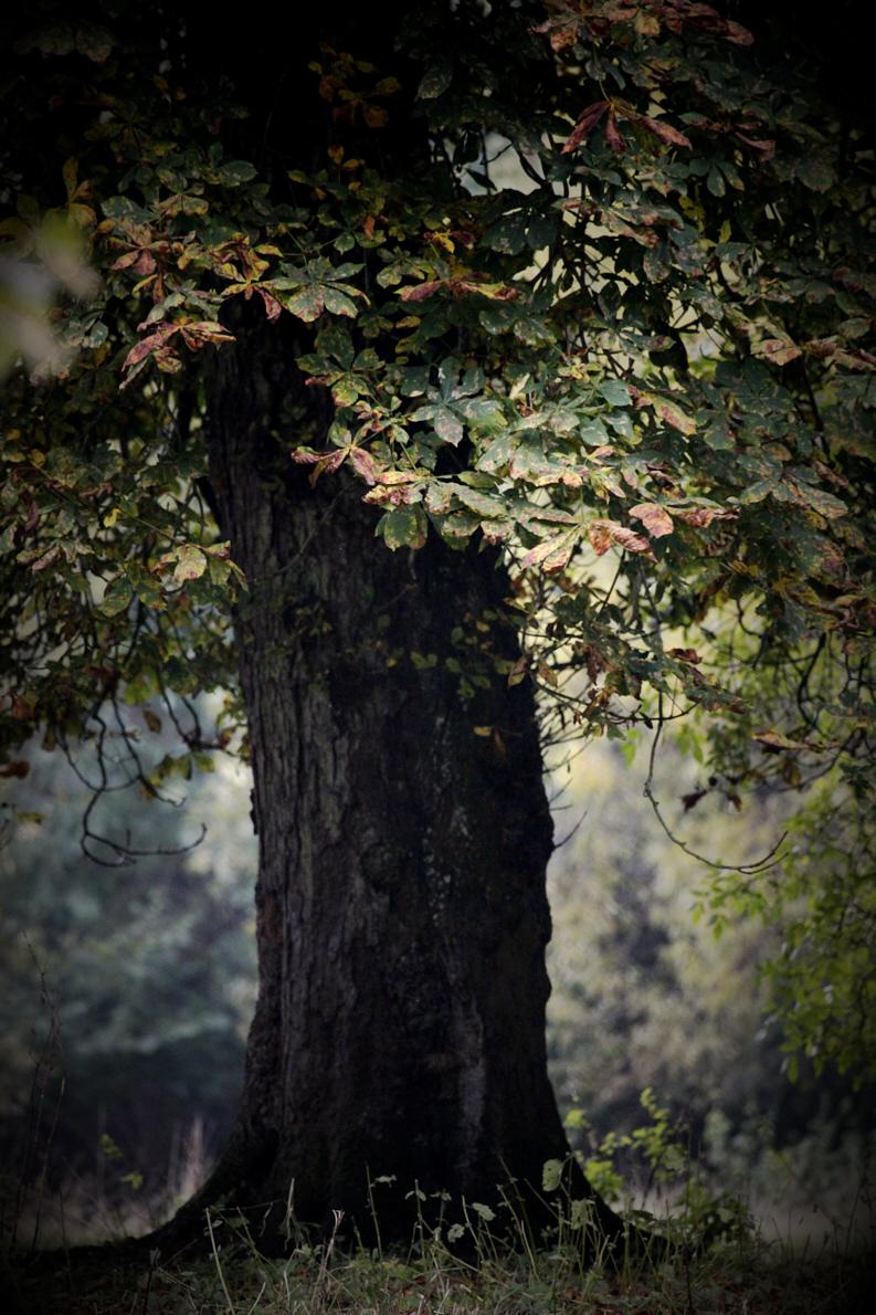 ReneRoalf_AutumnSeries_Untitled2.jpg