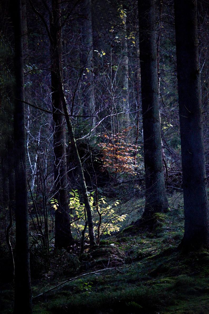 ReneRoalf_AutumnSeries_Untitled5.jpg