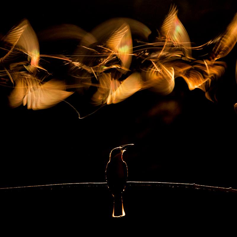 Bence_Mate_Light_Wings.jpg