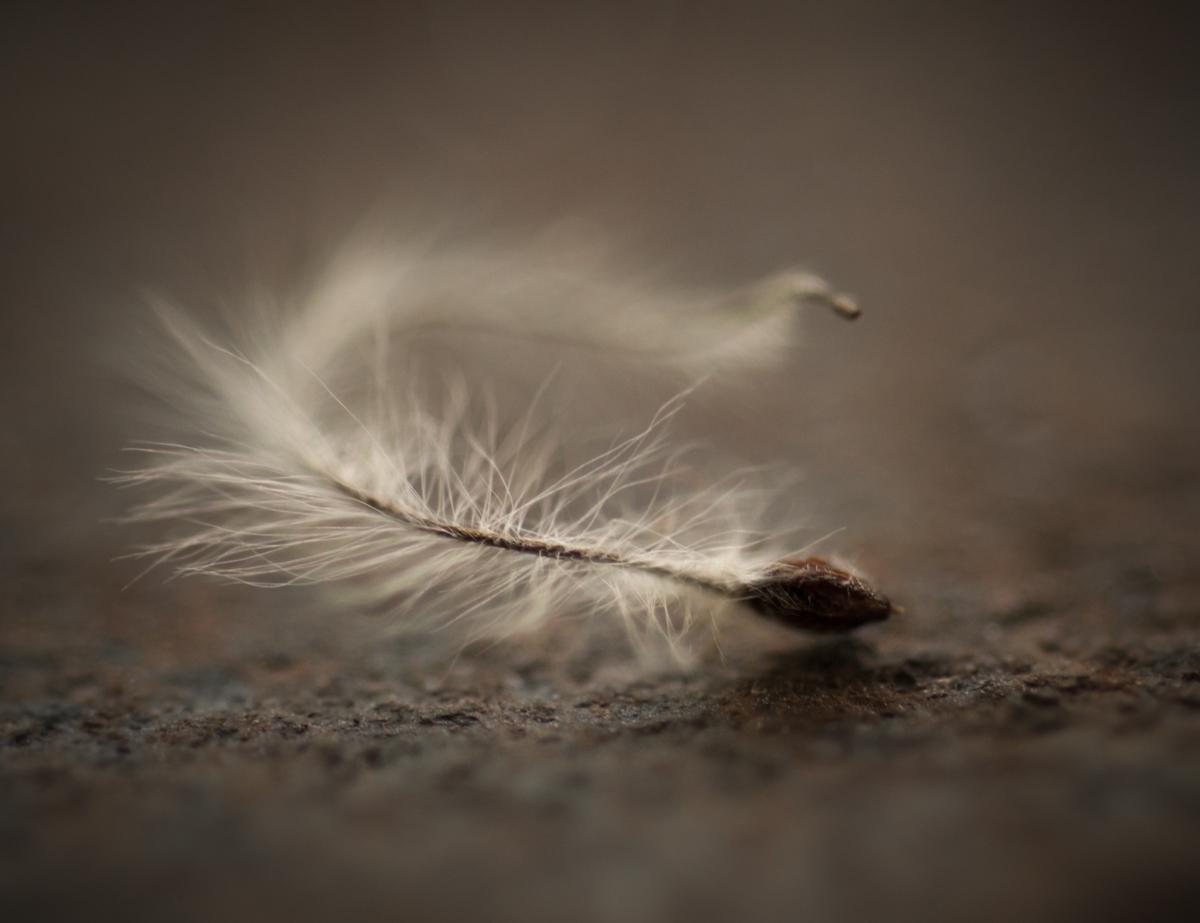 Carol Sharp_Seed-1.jpg