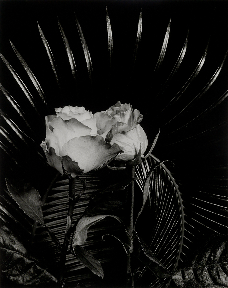 Dale M Reid_Two Equals One_Radiant Roses 1.jpg