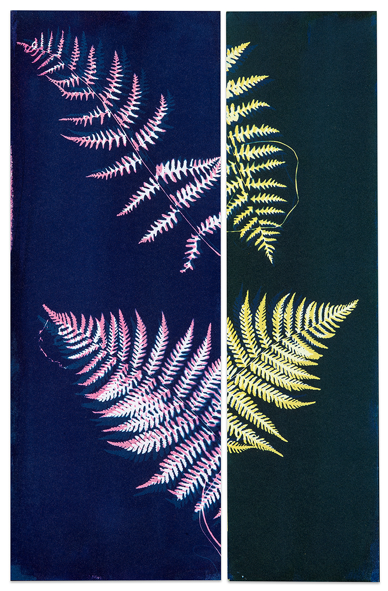 Paula Riff_Conversations with Paper and Paint_Not A Fern.jpg