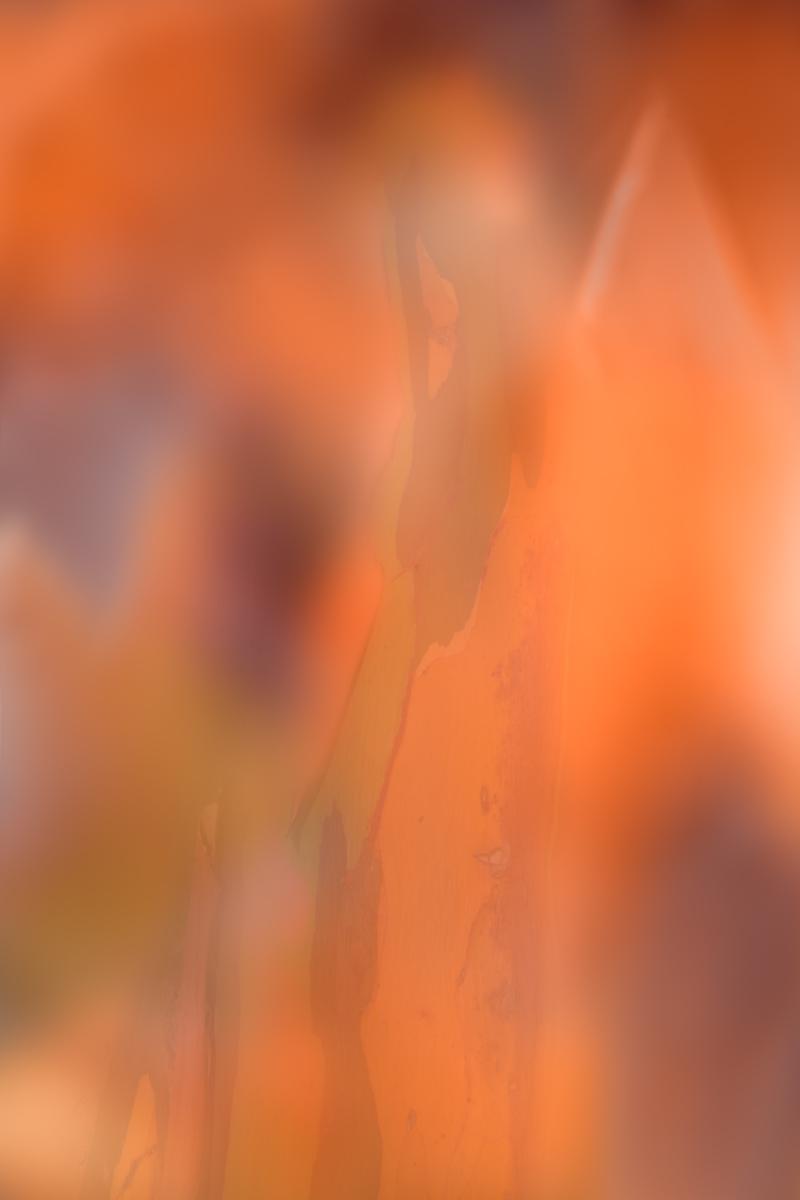 MartineMichaud_Colors_Orange.jpg