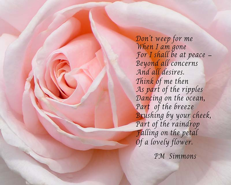 PM Simmons_Pink Rose.jpg