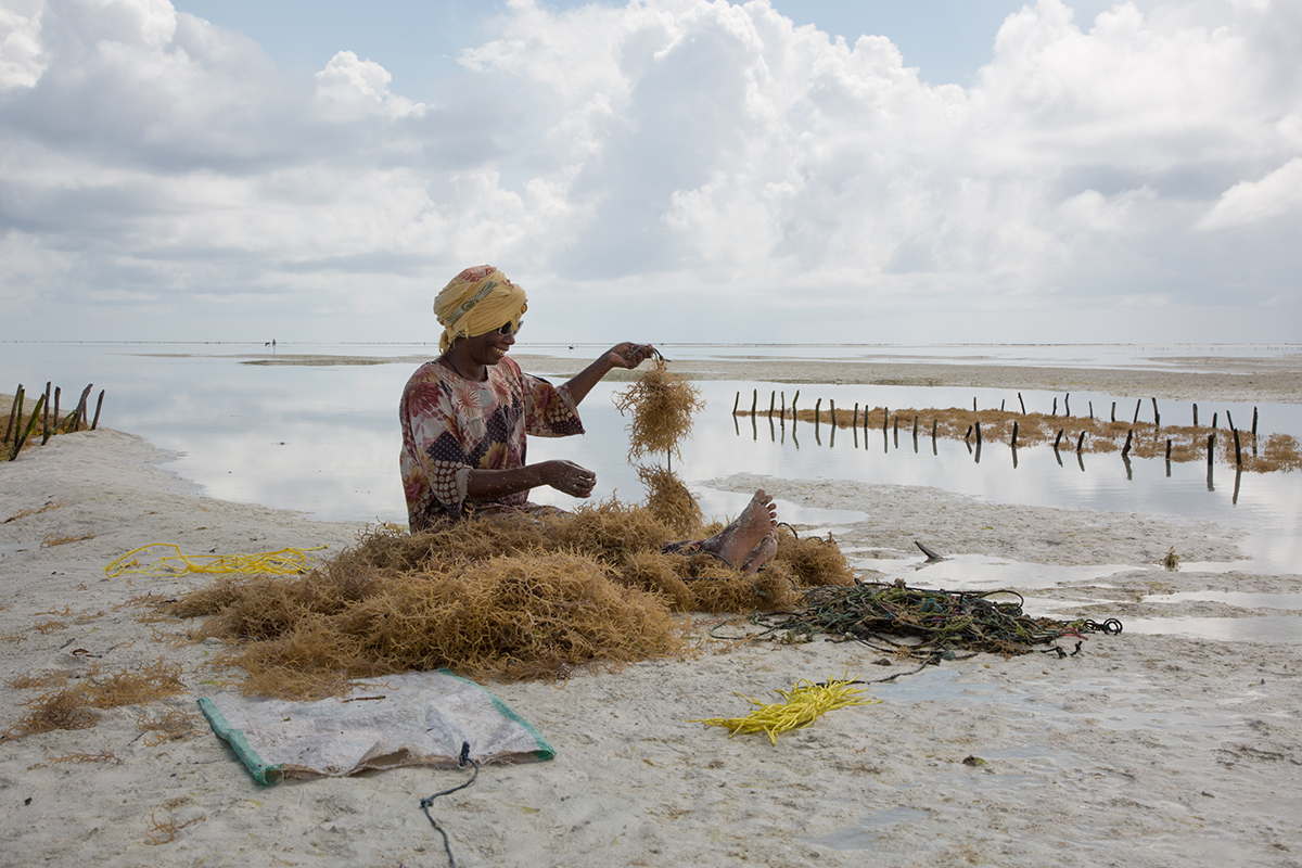 Kiki-Streitberger_Seaweed-Farming-in-Zanzibar_2.jpg