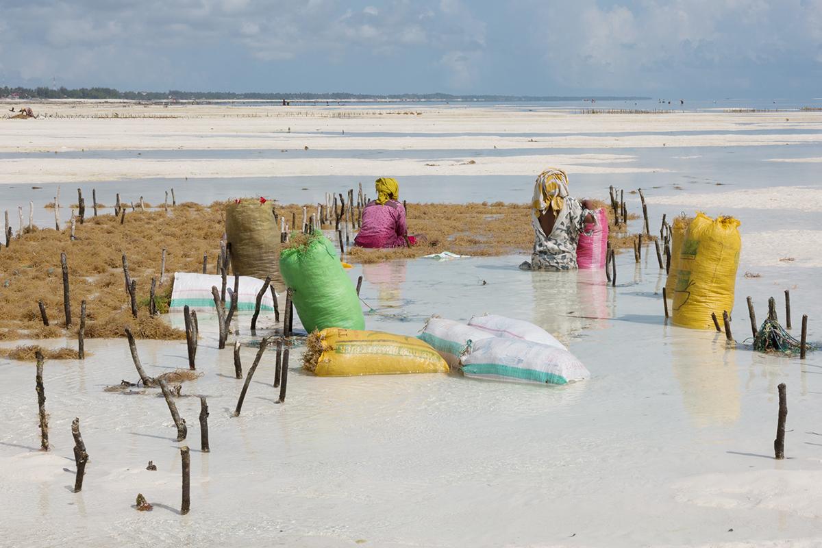 Kiki-Streitberger_Seaweed-Farming-in-Zanzibar_3.jpg