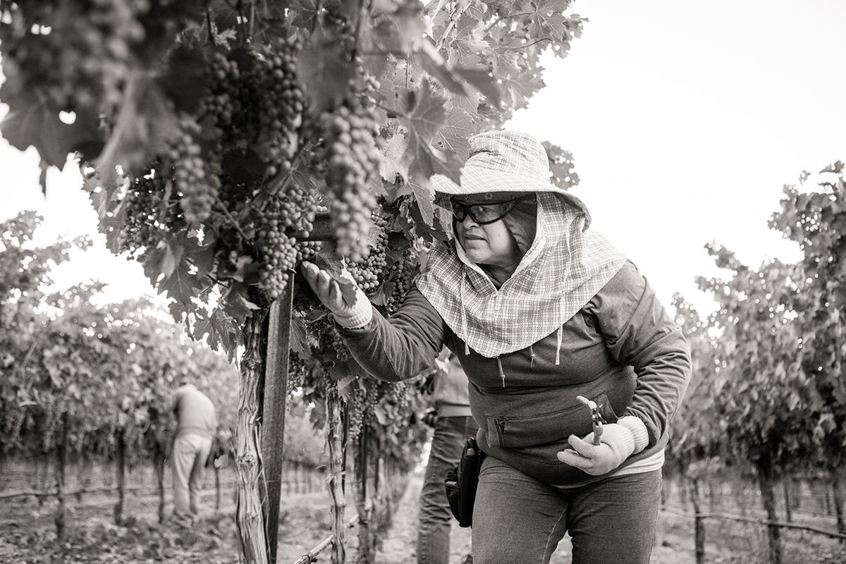 SuzanneBeckerBronk_Vineyard Women_Dropping Fruit 1.jpg