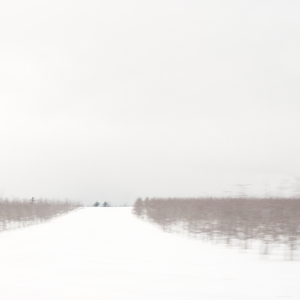 DebraBilow_Winter Field North Country_No. 6.jpg