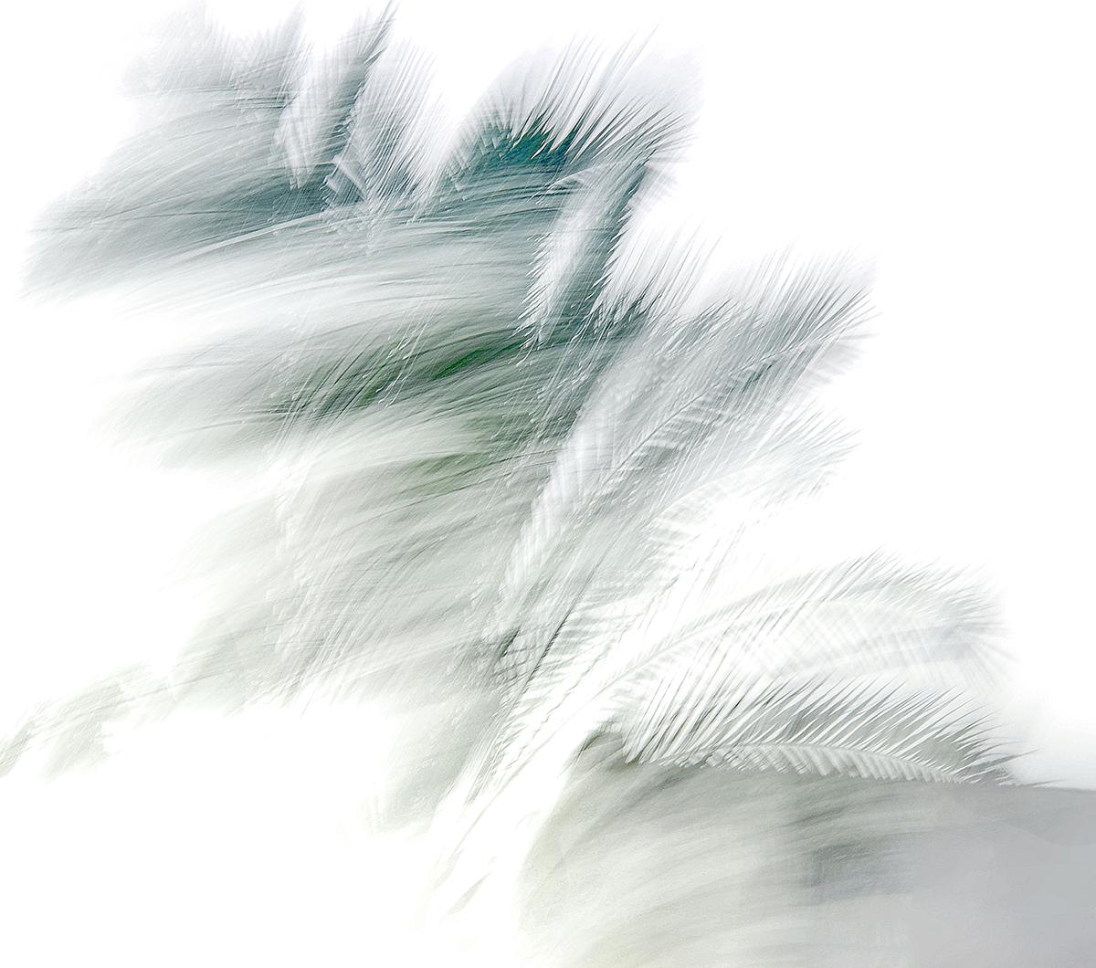 Shifra Levyathan_Windy day.jpg