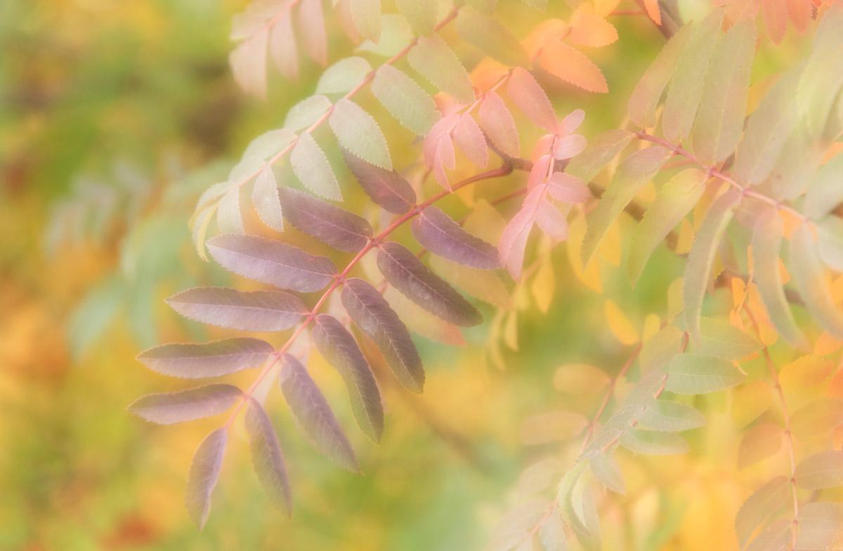 Susan Onysko_Beauty of Fall_.jpg